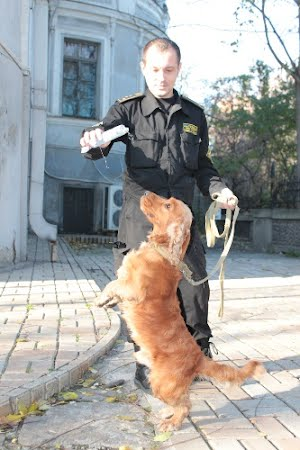 Служебные собаки – друзья, коллеги и фотомодели