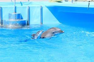 С прибавлением, дельфинарий!